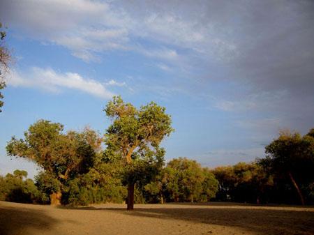 新闻名称:额济纳旗旅游 添加日期:2009-09-20 21:52:30 浏览次数:5436
