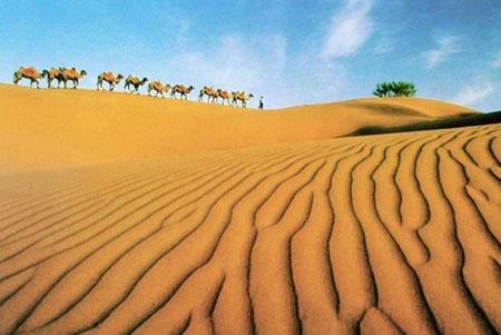 新闻名称:沙坡头旅游 添加日期:2009-09-20 21:09:55 浏览次数:5064